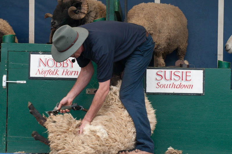 Wie man ein Schaf nackig macht 2