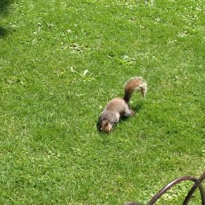 Drollige Eichhörnchen fressen sogar aus der Hand